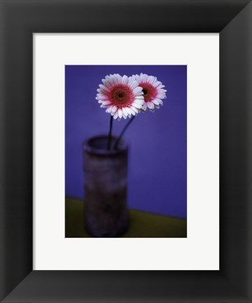 Framed Pink Daisies Print