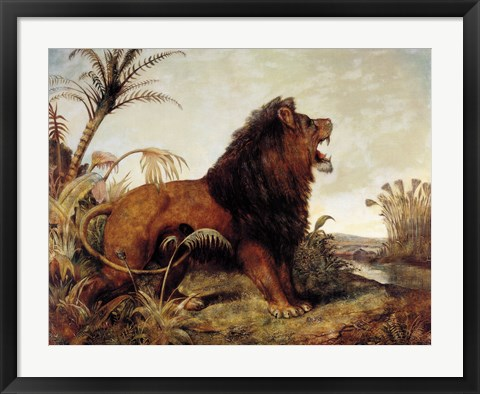 Framed Lion in the Jungle Print