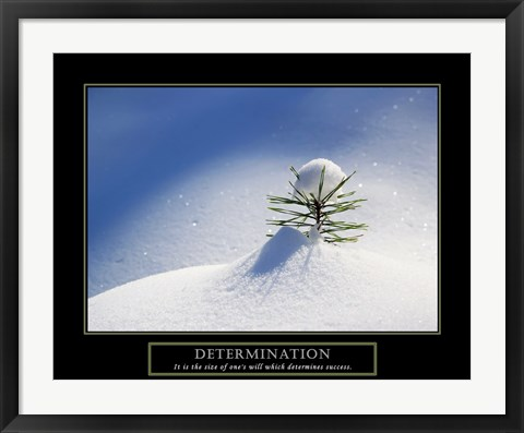 Framed Determination - Little Pine Print