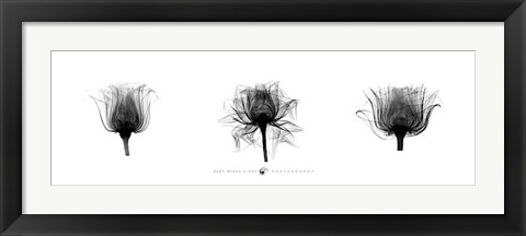 Framed X-Ray Rose Triptych Print