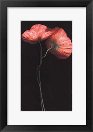 Framed Poppy Duet Print
