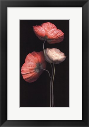 Framed Poppy Trio Print
