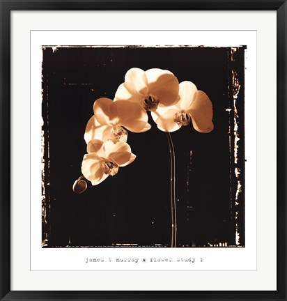 Framed Flower Study I Print
