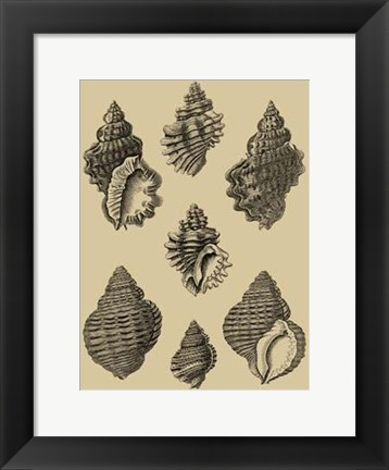 Framed Shells On Khaki V Print