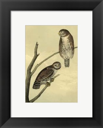 Framed Columbian Day-Owl Print