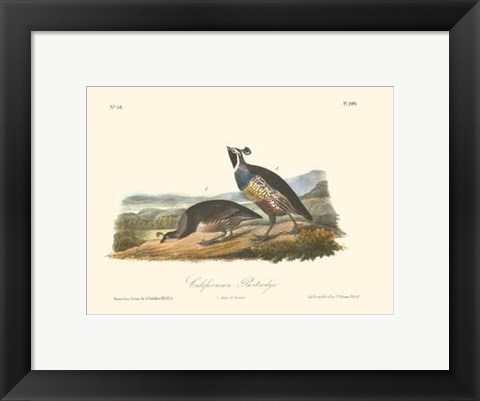 Framed California Partridge Print