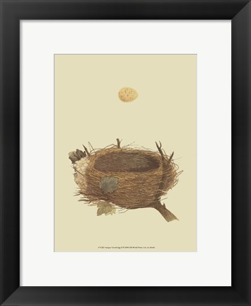 Framed Antique Nest Egg II Print