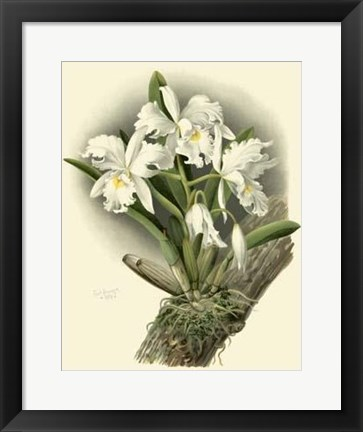 Framed Dramatic Orchid I Print