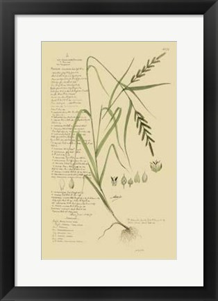 Framed Descubes Ornamental Grasses I Print