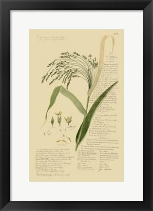 Framed Descubes Ornamental Grasses V Print