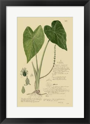 Framed Descubes Aroid Plant I Print