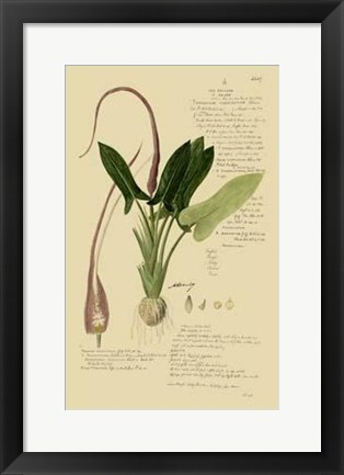 Framed Descubes Aroid Plant II Print