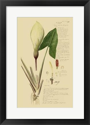 Framed Descubes Aroid Plant III Print