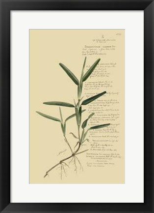 Framed Descubes Tropical Grasses IV Print