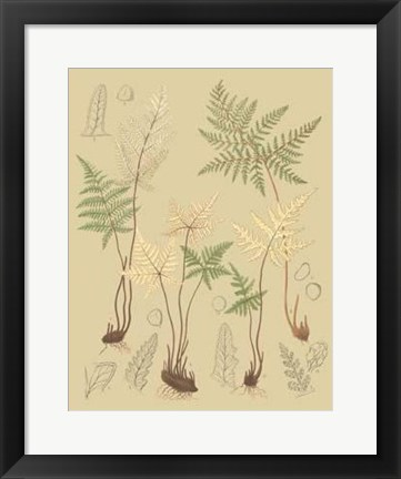 Framed Nature's Lace II Print