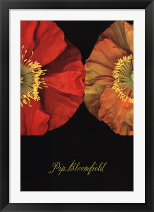 Framed Red And Yellow Poppy I Print