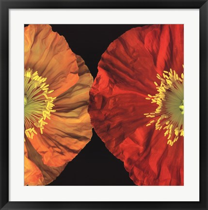 Framed Red And Yellow Poppy II Print