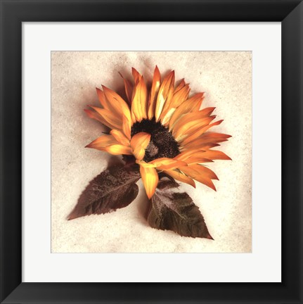 Framed Sand Sunflower Print