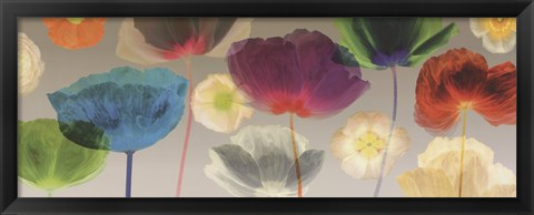 Framed Poppy Panorama Print