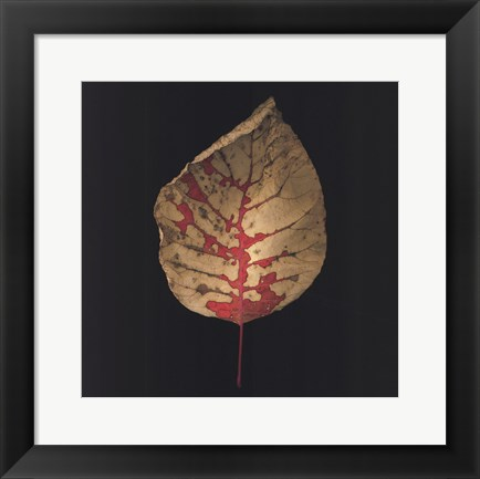 Framed Smokebush Print