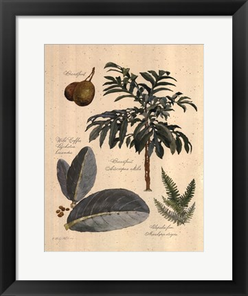 Framed Rainforest Collection II Print