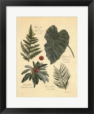 Framed Rainforest Collection IV Print