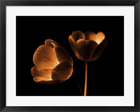 Framed Tulip Duo Print