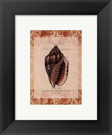 Framed Shell Botanical II Print