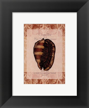 Framed Shell Botanical IV Print