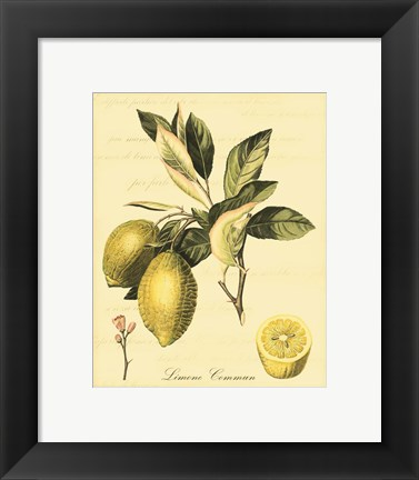 Framed Petite Tuscan Fruits II Print