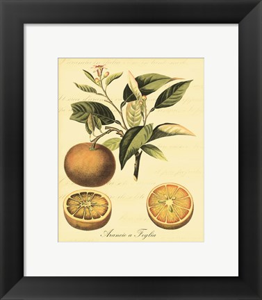 Framed Petite Tuscan Fruits III Print