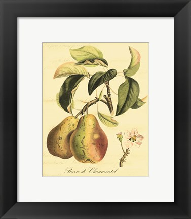 Framed Petite Tuscan Fruits IV Print