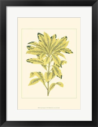 Framed Tropical Variegation IV Print