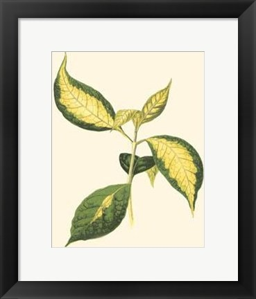 Framed Tropical Variegation VI Print