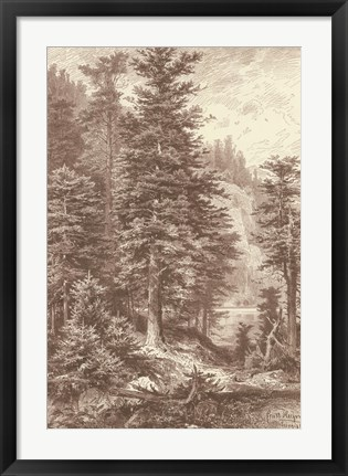 Framed Sepia Noble Fir Print