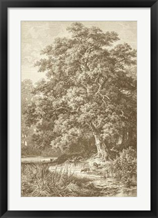 Framed Sepia Oak Tree Print