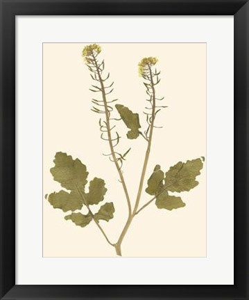 Framed Pressed Botanical I Print