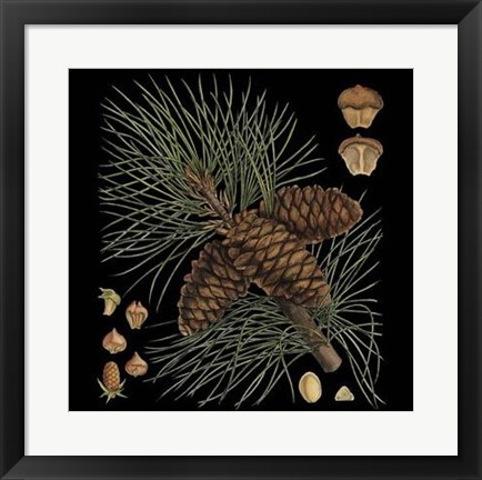 Framed Dramatic Conifers V Print