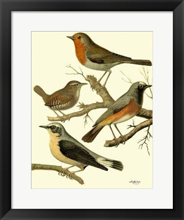 Framed Domestic Bird Family III Print