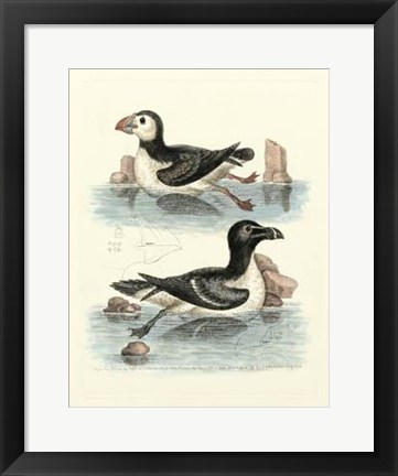 Framed Aquatic Birds II Print