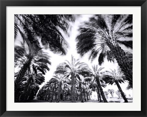 Framed Spinning Palms Print