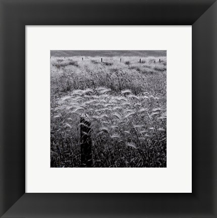 Framed Fence Posts Print