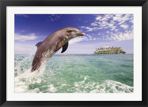 Framed Dolphin Leaping Print