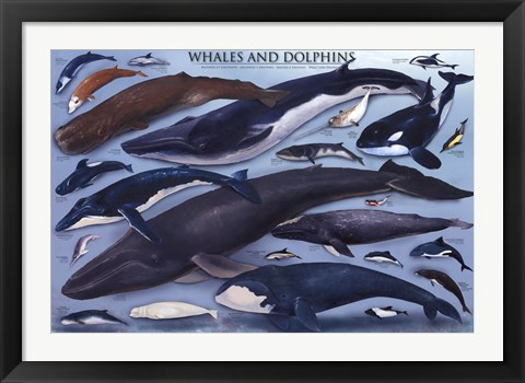 Framed Whales And Dolphins Print