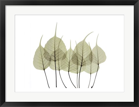 Framed Woodlands I Print