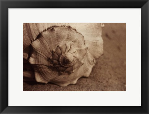Framed Conch Print