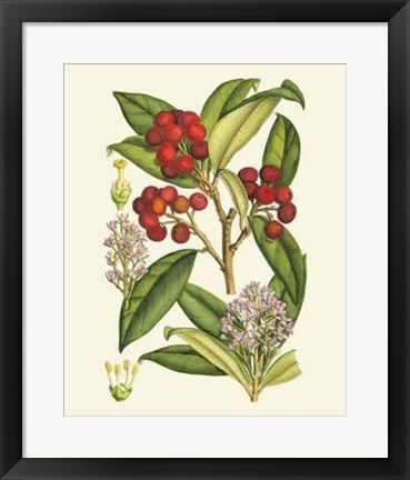 Framed Crimson Berries I Print