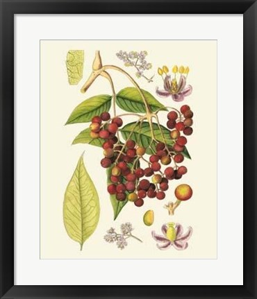Framed Crimson Berries IV Print