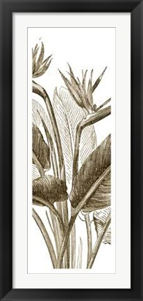 Framed Bird Of Paradise Triptych II Print