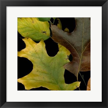 Framed Vivid Leaves II Print